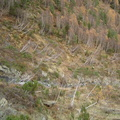 Les couloirs d'avalanche en Vicdessos||<img src=_data/i/upload/2012/08/29/20120829143338-b76d7c76-th.jpg>