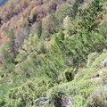 Les couloirs d'avalanche en Vicdessos||<img src=i.php?/upload/2012/08/29/20120829143133-c982a483-th.jpg>