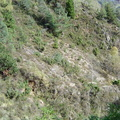 Les couloirs d'avalanche en Vicdessos||<img src=_data/i/upload/2012/08/29/20120829143145-5336edb5-th.jpg>