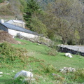 Les couloirs d'avalanche en Vicdessos||<img src=i.php?/upload/2012/08/29/20120829143235-beb8bac2-th.jpg>